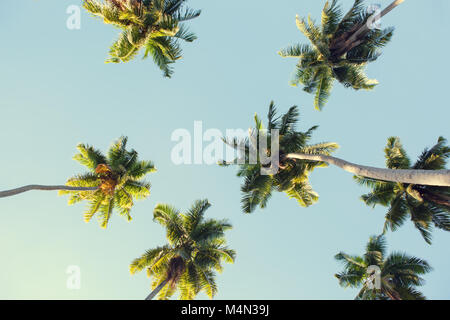 Coconut palms against the blue sky.  Low Angle View. Toned image - Stock Photo