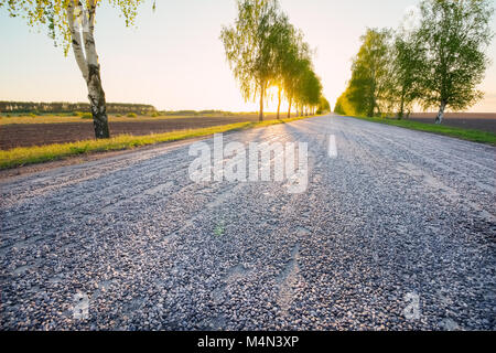 Landscape of the highway with trees along the roadside in the background against a beautiful summer sunset - Stock Photo