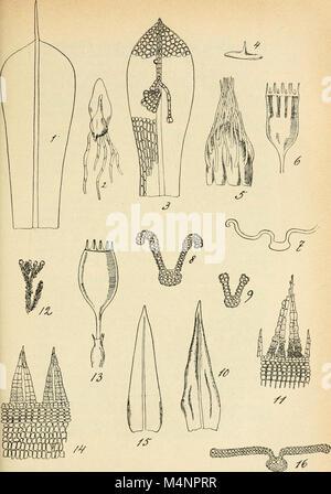 Berichte der Schweizerischen Botanischen Gesellschaft - Bulletin de la Socit botanique Suisse (1891-1981) (20372713381) - Stock Photo