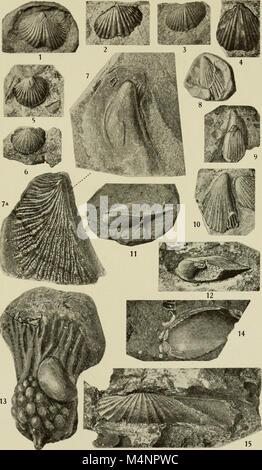 Bericht der Senckenbergischen Naturforschenden Gesellschaft in Frankfurt am Main (1897-1921.) (19743153194) - Stock Photo