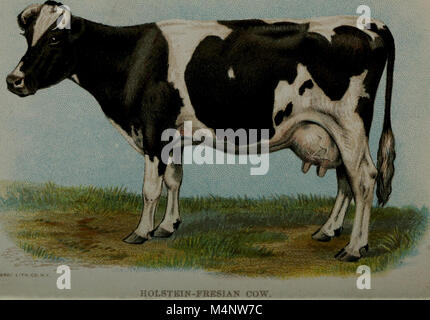 Biggle cow book; old time and modern cow-lore rectified, concentrated and recorded for the benefit of man (1913) - Stock Photo