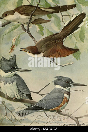 Birds of Massachusetts and other New England states (1925) (19762512654) - Stock Photo