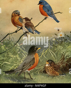 Birds of Massachusetts and other New England states (1925) (19762589024) - Stock Photo