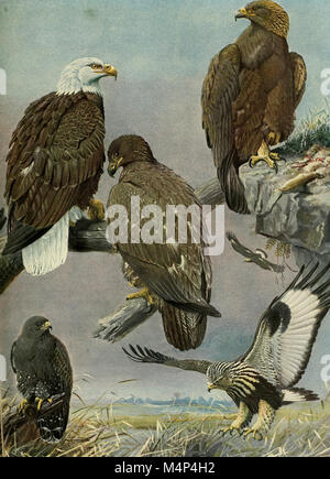 Birds of Massachusetts and other New England states (1925) (20197152388) - Stock Photo