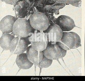 Bolgiano's capitol city seeds - 1963 (1963) (20202458680) - Stock Photo