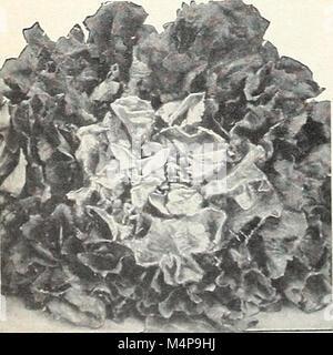 Bolgiano's capitol city seeds - 1963 (1963) (20390492665) - Stock Photo