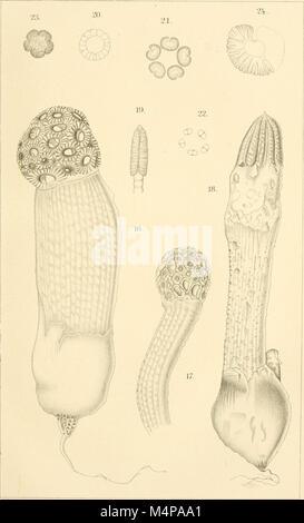 Annals of the Royal Botanic Gardens, Peradeniya (1901-1924) (18410445392)