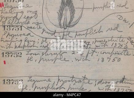 Book no. 10, H.A. Allard, field collection specimen no. 13000-14343 (1945) (20212256910) - Stock Photo