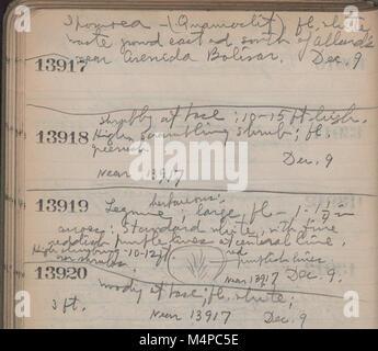 Book no. 10, H.A. Allard, field collection specimen no. 13000-14343 (1945) (20400474575) - Stock Photo