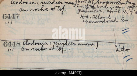 Book no. 5, H.A. Allard, field collection specimen no. 6104-7447 (1939) (20399460985) - Stock Photo