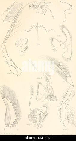 Annals of the South African Museum. Annale van die Suid-Afrikaanse Museum (18416535332) - Stock Photo