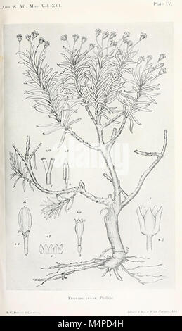 Annals of the South African Museum. Annale van die Suid-Afrikaanse Museum (18420751575) - Stock Photo