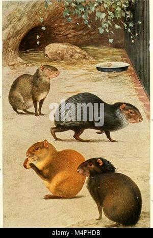 Brehms Tierleben. Allgemeine kunde des Tierreichs (1911) (19791192264) - Stock Photo