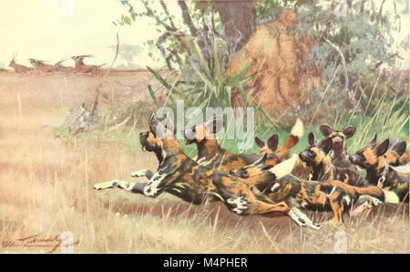 Brehms Tierleben. Allgemeine kunde des Tierreichs (1911) (20226030958) - Stock Photo