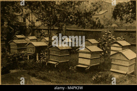 British bee journal and bee-keepers adviser (1900) (20422313101) - Stock Photo
