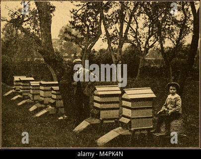 British bee journal and bee-keepers adviser (1905) (19795018823) - Stock Photo
