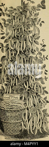 Annual catalogue - seeds, bulbs, plants, implements, etc (1895) (18238369459) - Stock Photo