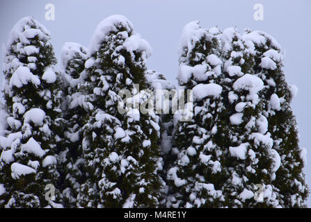 Small green spruce under the snow. Snow-covered green branches of spruce. Good snowy winter weather. - Stock Photo