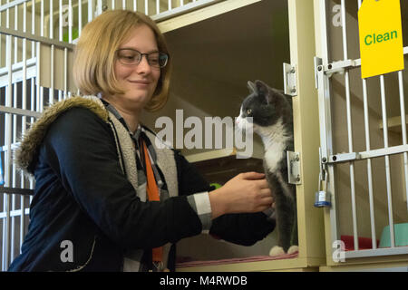 A volunteer pets a kitten at the local animal shelter. - Stock Photo