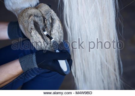 Man cleaning horse hoof - Stock Photo
