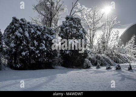 trees with snow in a night winter - Stock Photo
