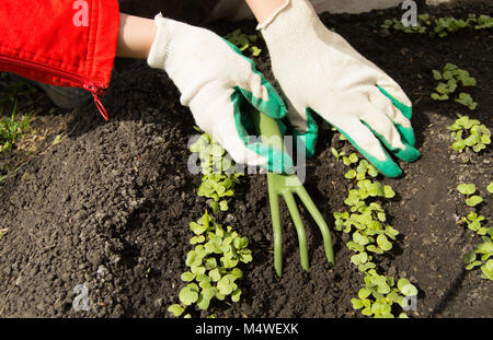 Woman wearing gardening gloves holding a rake and shovel, caring for plants - Stock Photo
