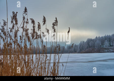 White frost covered trees in winter landscape against cloudy sky - Stock Photo