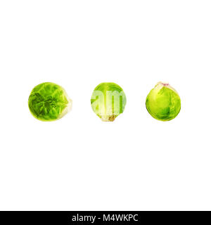 Brussels sprouts Top view Three fruits of brussels sprouts are lying in a row on a white background Flat lay photo - Stock Photo