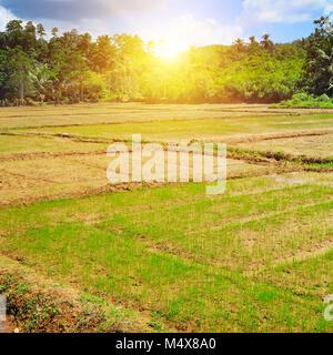 paddy field and sunrise - Stock Photo