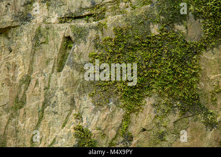 moss on the stone - Stock Photo