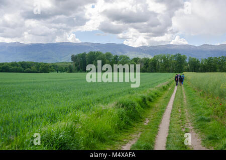 Group of young adults walking on a narrow path through meadows overlooked by Alps under a cloudy sky at Prévessin - Stock Photo