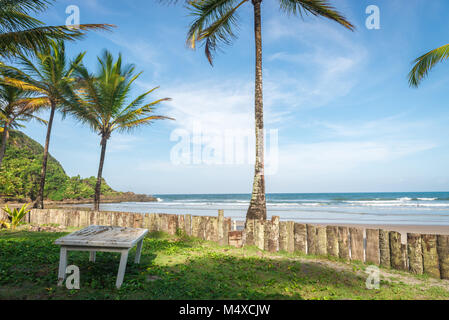 palm tree trunk wood fence in the beach - Stock Photo