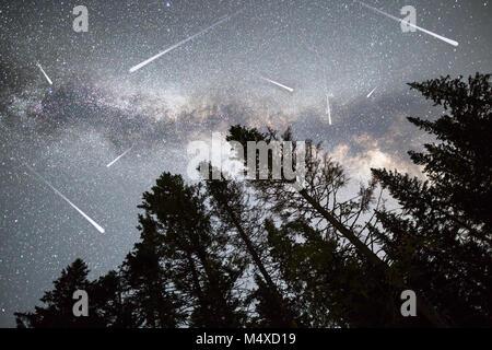 Pine trees silhouette Milky Way falling stars - Stock Photo