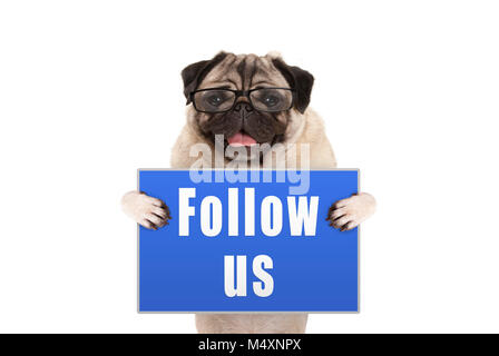 pug dog with glasses holding up blue sign with text follow us, isolated on white background - Stock Photo