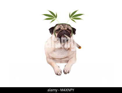pug puppy dog being high, smoking marijuana weed joint, wearing hemp leaves diadem, isolated on white banner - Stock Photo