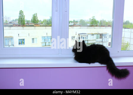 black cat sits on the window-sill of balcony - Stock Photo