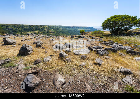 Gamla nature reserve - Stock Photo