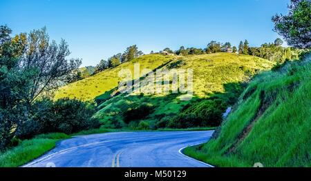 muir woods forest drive by nature near san francisco - Stock Photo