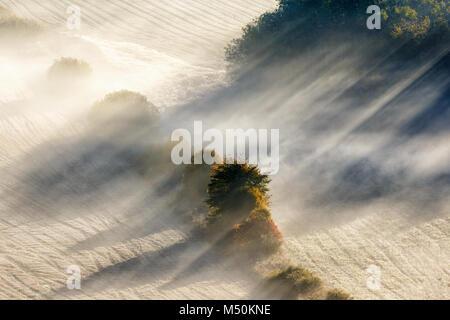 Sun rays in fog on a field - Stock Photo