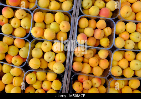display of apricots in plastic containers, norfolk, england - Stock Photo
