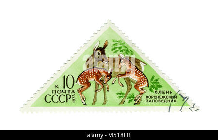 USSR - CIRCA 1973: Postage stamp of the series 'Fauna - Nature Reserves' with a picture of Deer, printed in USSR, - Stock Photo