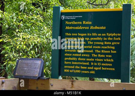 Ancient northern Rata tree information sign - Stock Photo