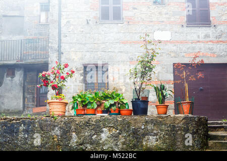 Potted plants on a wall in a backyard - Stock Photo