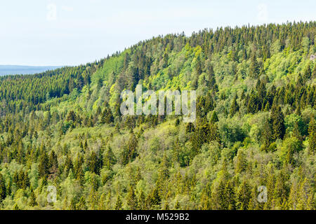 Coniferous forest landscape view in the summer - Stock Photo