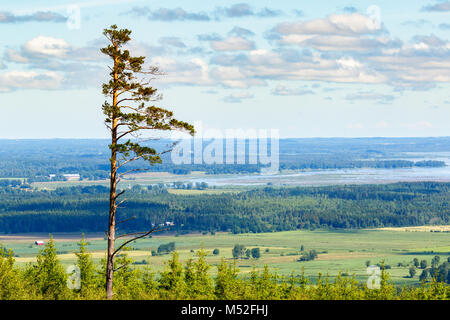 High pine trees in a scenic landscape view - Stock Photo