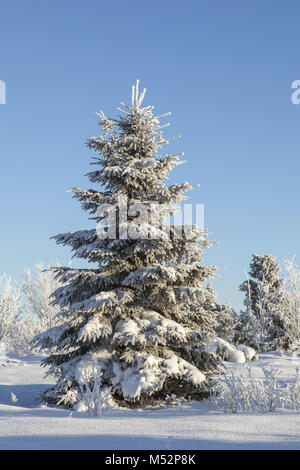 Spruce tree with hoarfrost in winter landscape - Stock Photo