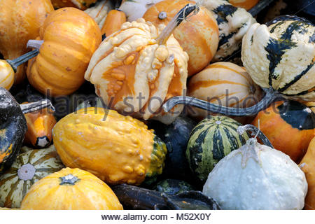Assortment of Gourd on display. - Stock Photo