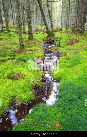 Small stream flowing through moss in the forest - Stock Photo