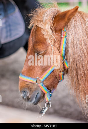 Close up of a head of a cute little pony - Stock Photo