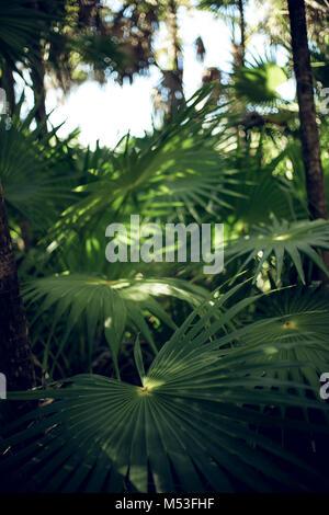 Exotic nature - Stock Photo